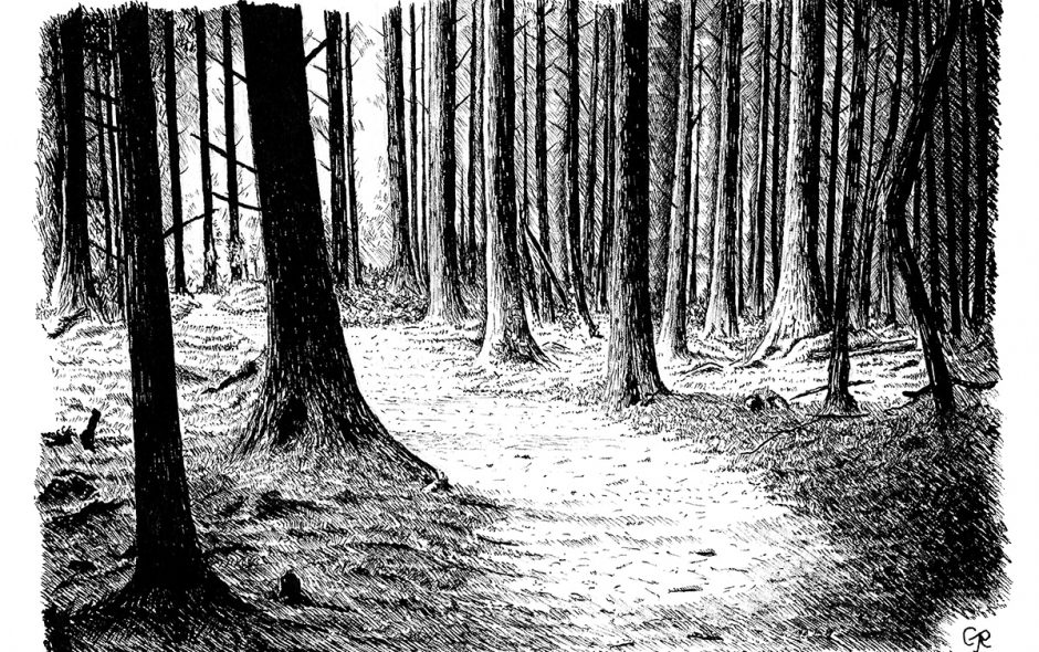 pen drawing of a trail through Brechfa Forest, Carmarthenshire